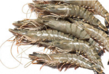 Why Choose Tiger Shrimp
